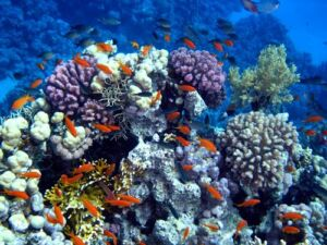 kekayaan laut negara indonesia