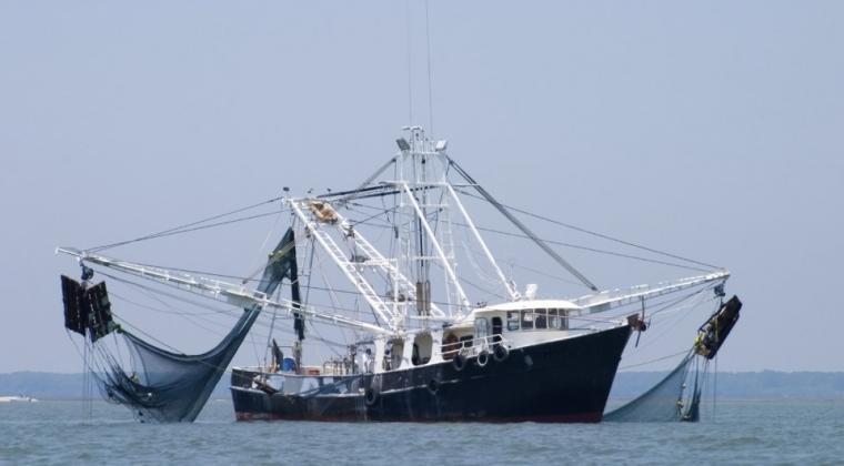 alat tangkap trawl
